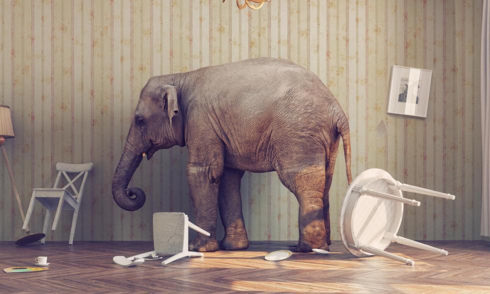 Elefant-im-Porzellanladen-Phrasen-und-Wendungen