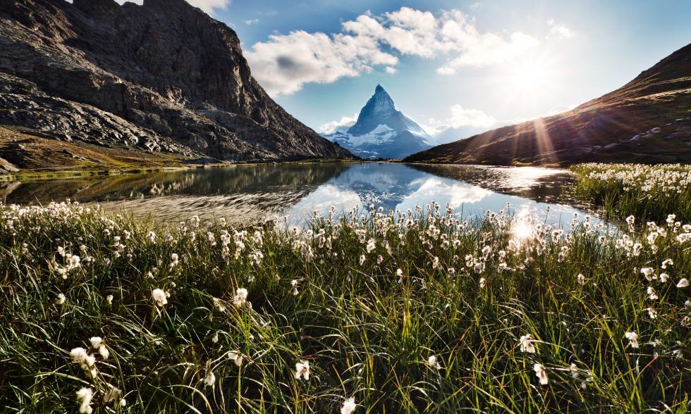 Wiese in den Alpen