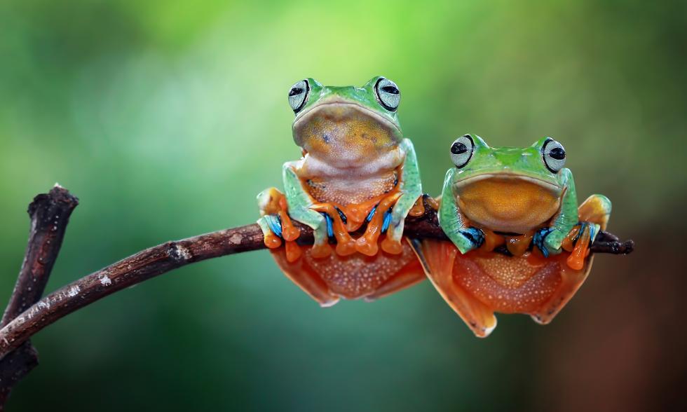 Zwei kleine Frösche hängen auf einem bunten Ast