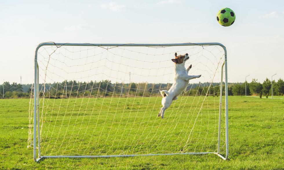 hund-spielt-fussball